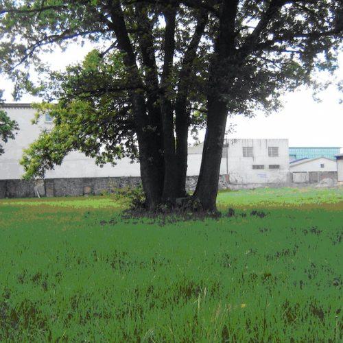 Klosterwuhne